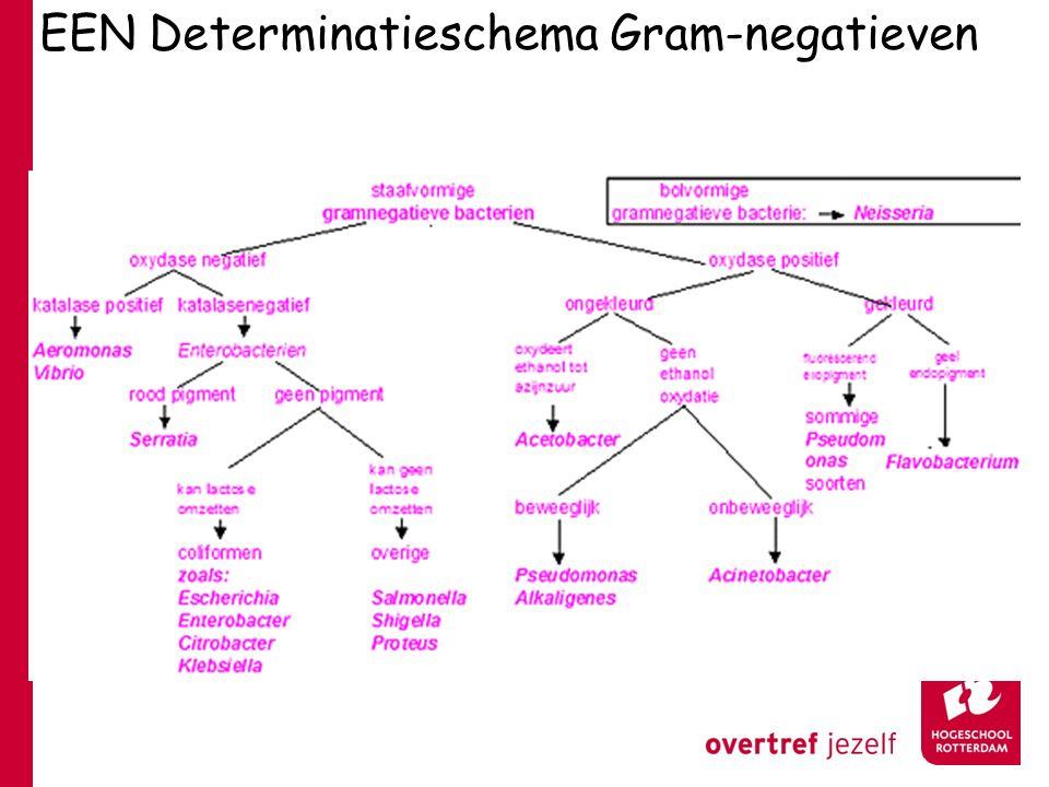 EEN Determinatieschema Gram-negatieven