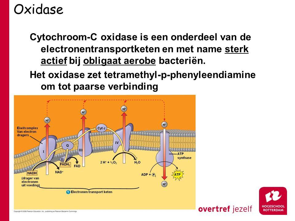 Oxidase Cytochroom-C oxidase is een onderdeel van de electronentransportketen en met name sterk actief bij obligaat aerobe bacteriën.