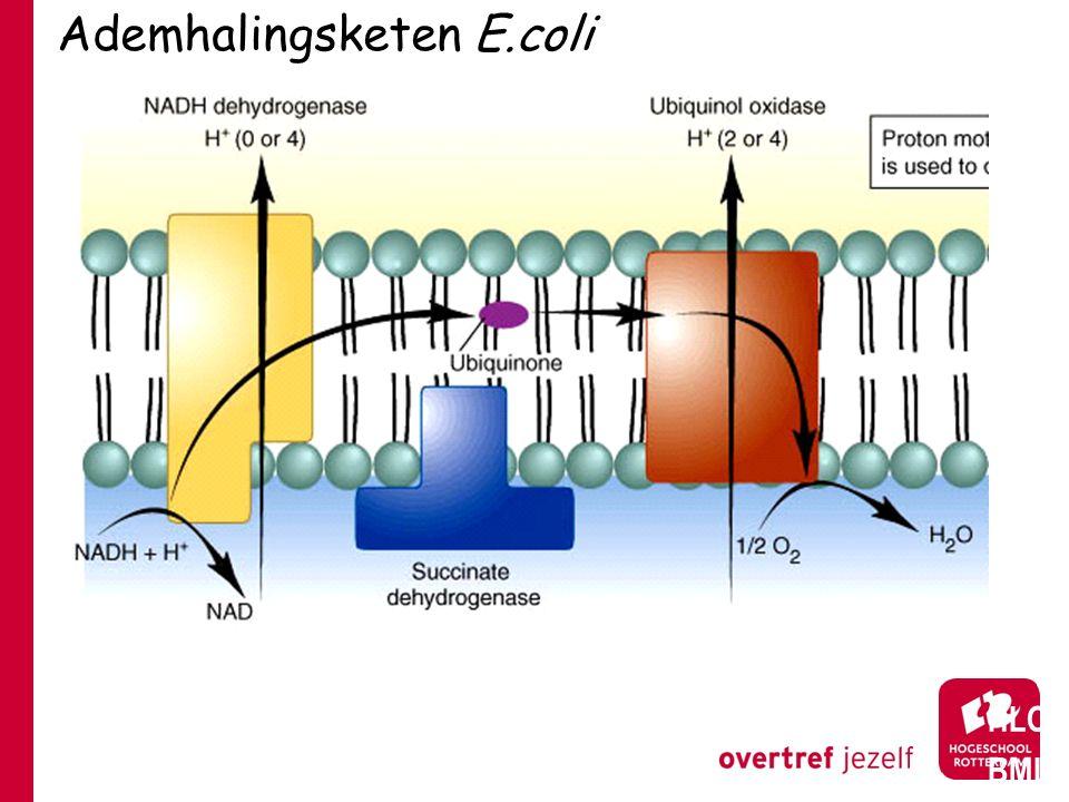 Ademhalingsketen E.coli