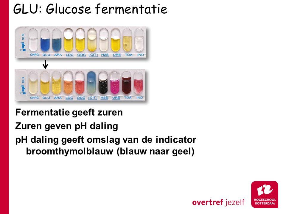 GLU: Glucose fermentatie