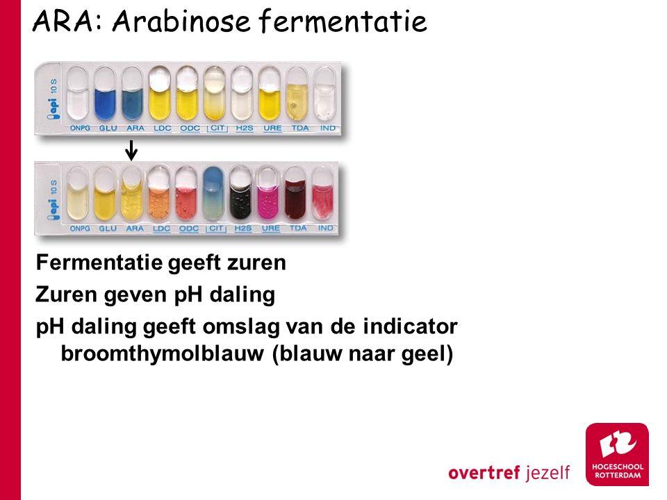 ARA: Arabinose fermentatie