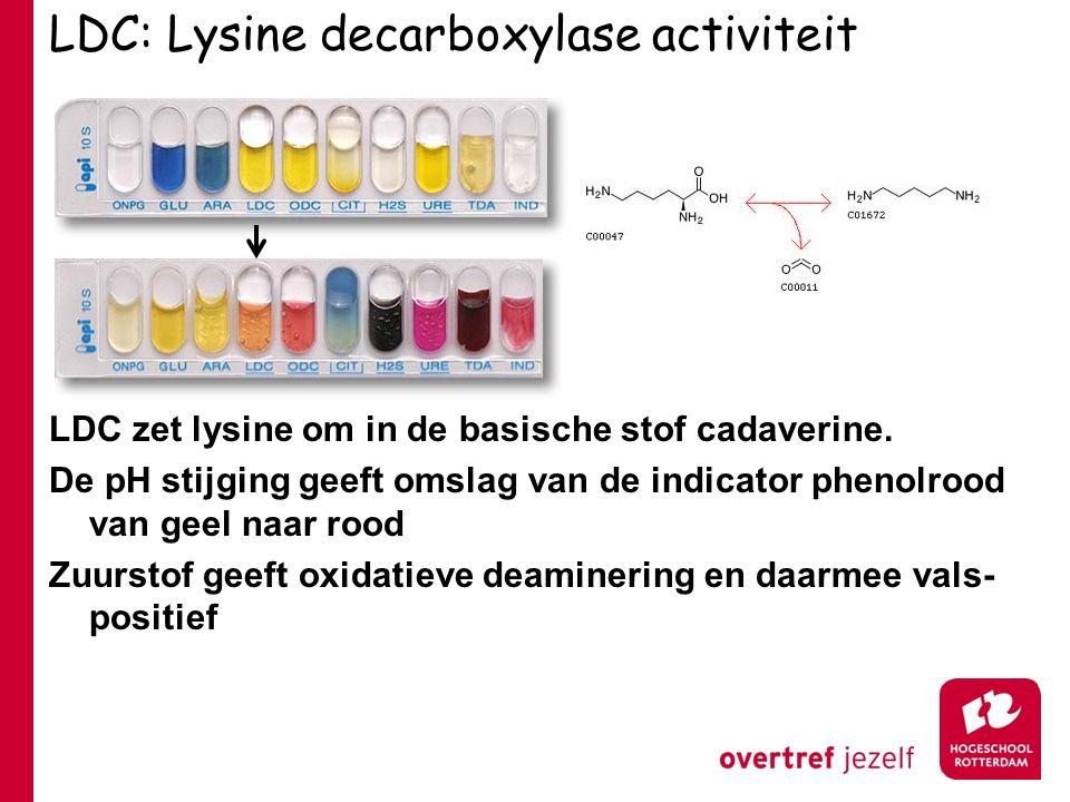 LDC: Lysine decarboxylase activiteit