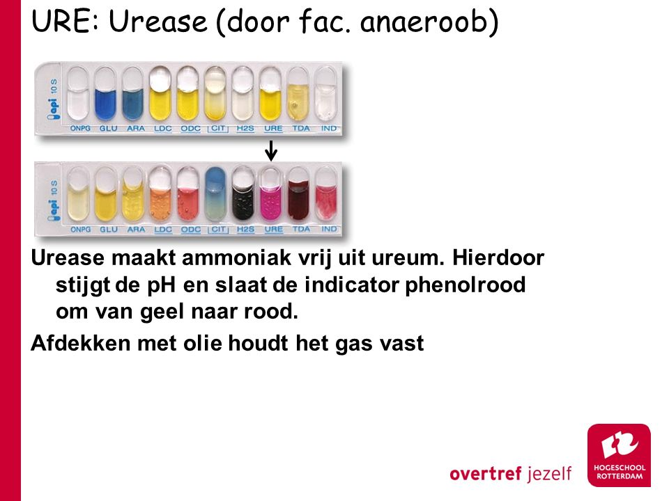URE: Urease (door fac. anaeroob)