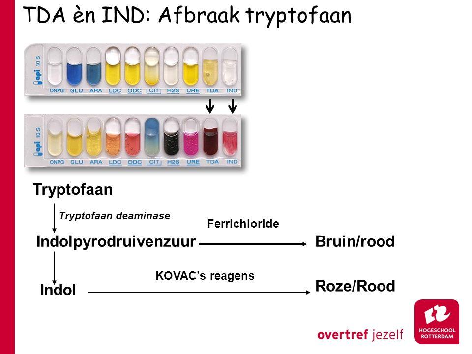 TDA èn IND: Afbraak tryptofaan