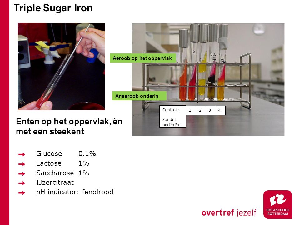 Triple Sugar Iron Enten op het oppervlak, èn met een steekent