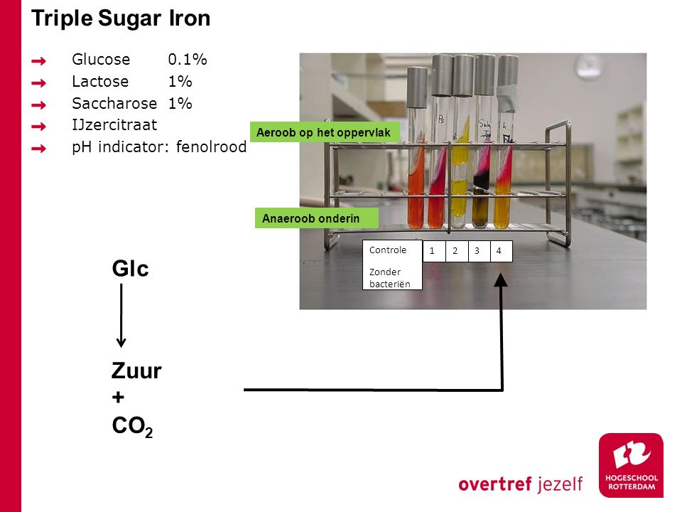 Triple Sugar Iron Glc Zuur + CO2 Glucose 0.1% Lactose 1% Saccharose 1%