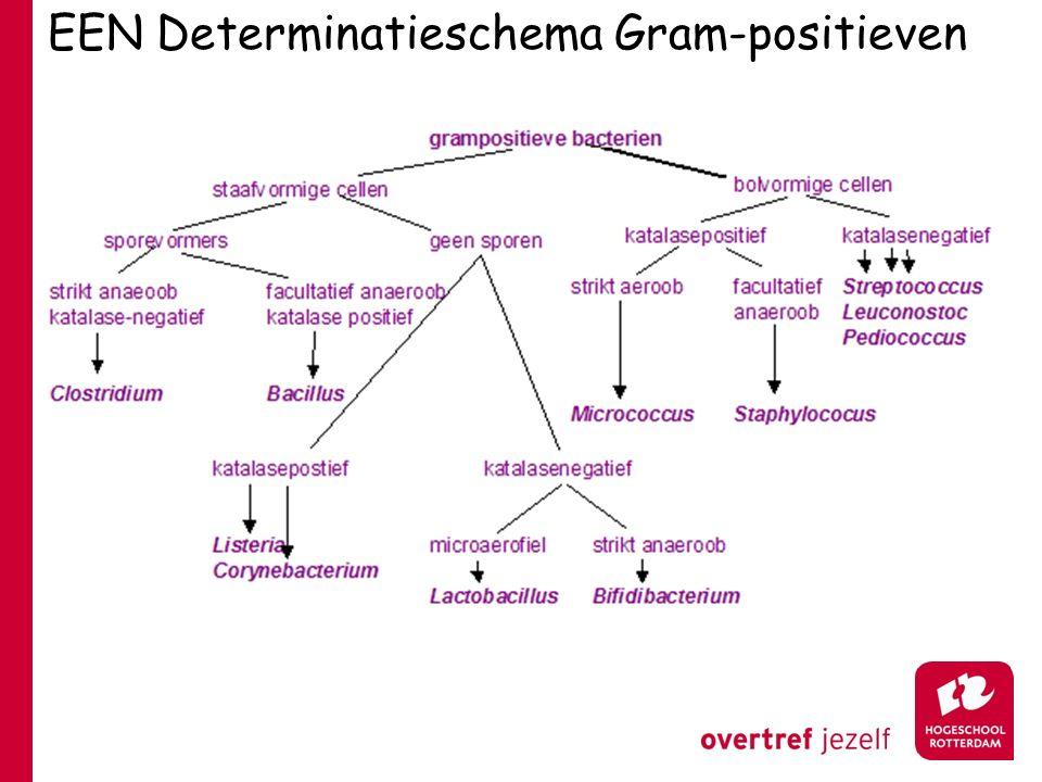 EEN Determinatieschema Gram-positieven