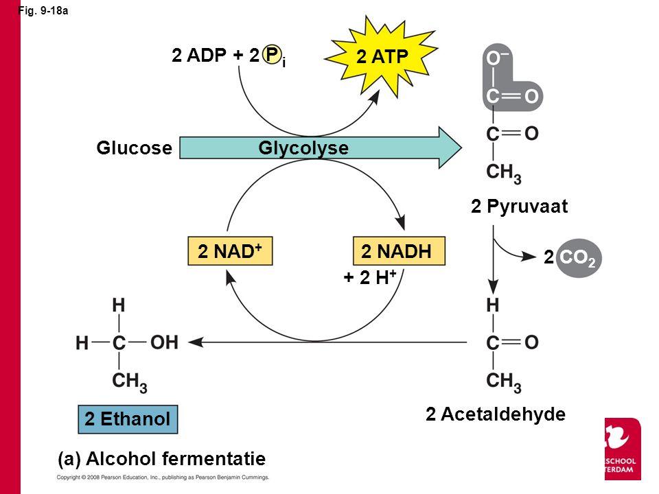 (a) Alcohol fermentatie
