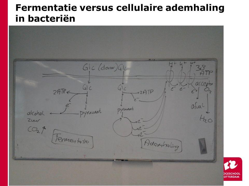 Fermentatie versus cellulaire ademhaling in bacteriën