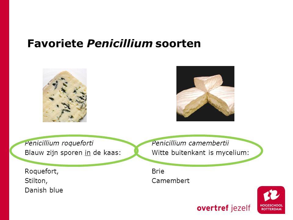 Favoriete Penicillium soorten