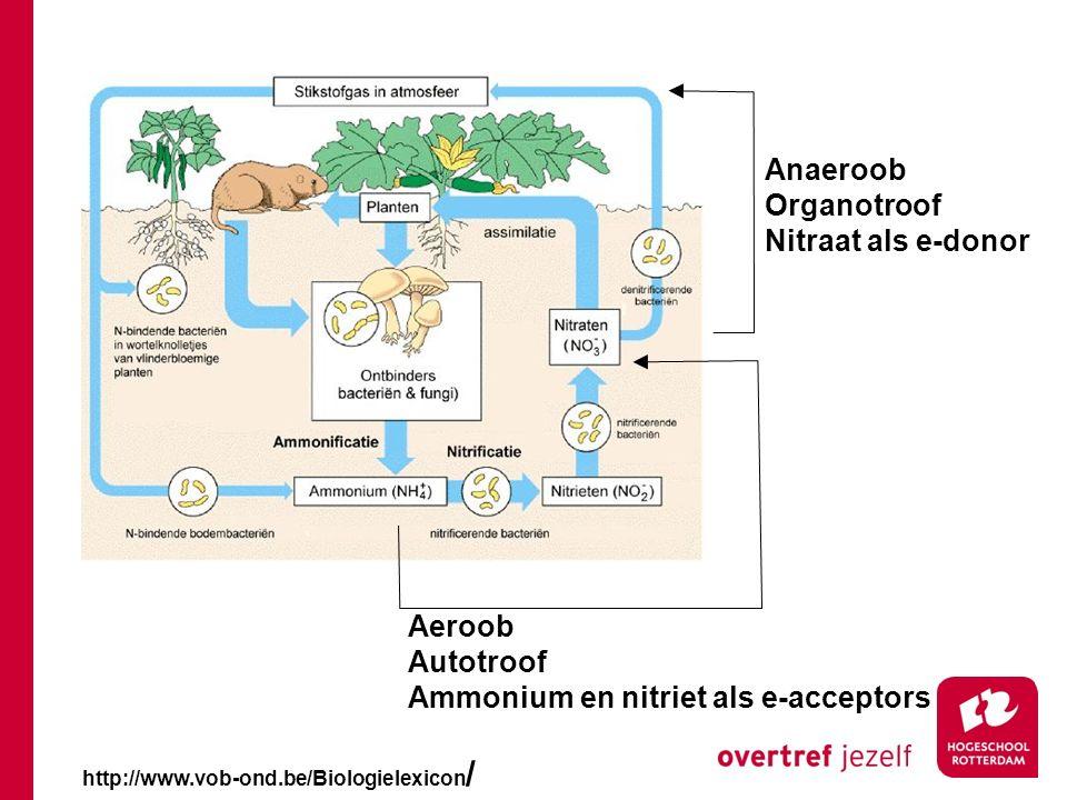 Ammonium en nitriet als e-acceptors