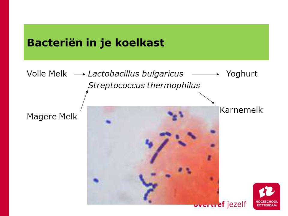 Bacteriën in je koelkast