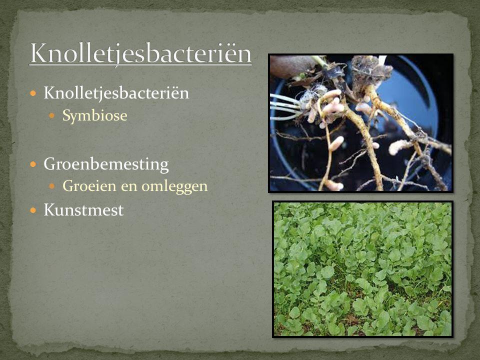 Knolletjesbacteriën Knolletjesbacteriën Groenbemesting Kunstmest