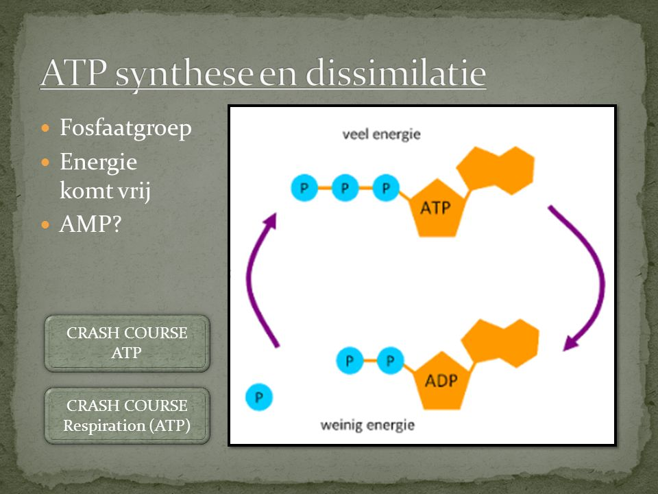 ATP synthese en dissimilatie