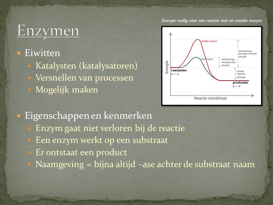 Enzymen Eiwitten Eigenschappen en kenmerken Katalysten (katalysatoren)