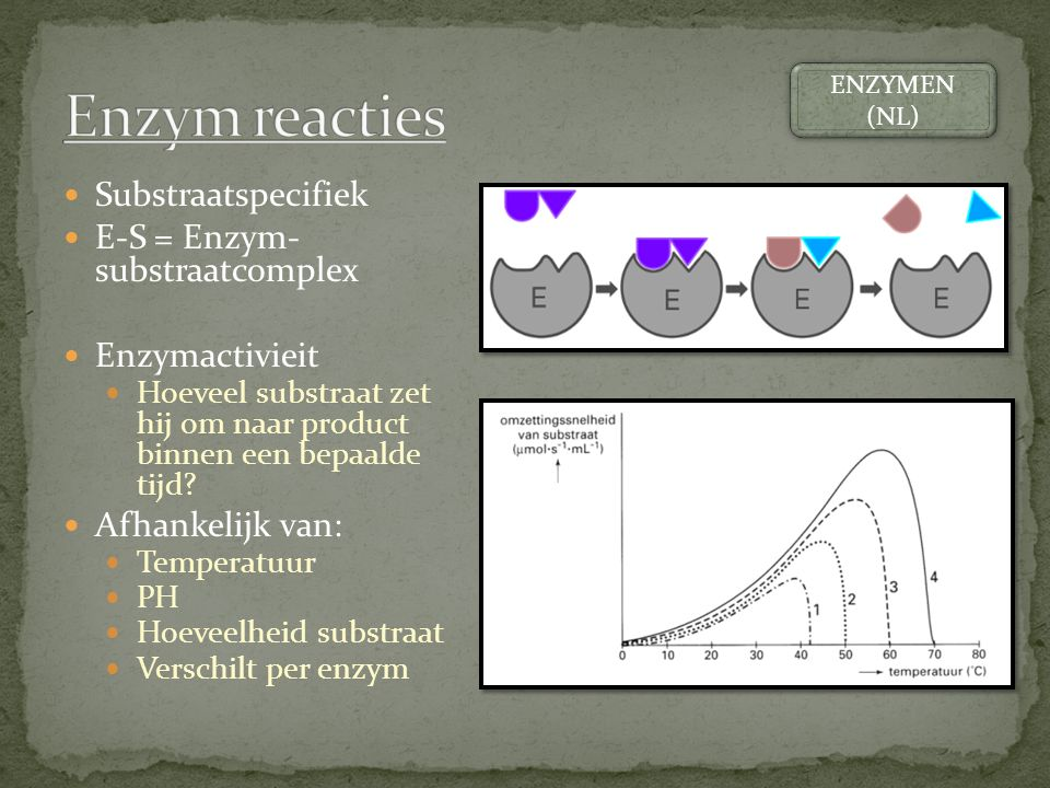 Enzym reacties Substraatspecifiek E-S = Enzym- substraatcomplex