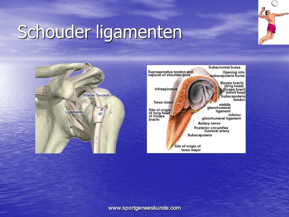 Schouder ligamenten www.sportgeneeskunde.com