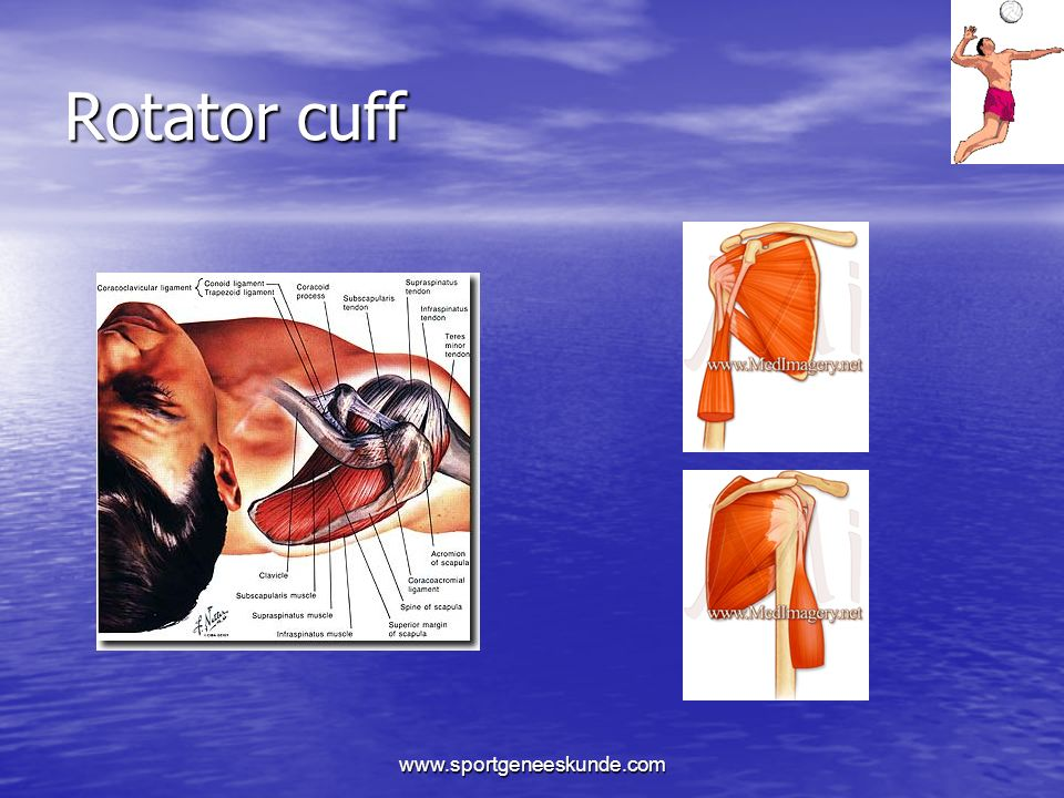 Rotator cuff www.sportgeneeskunde.com