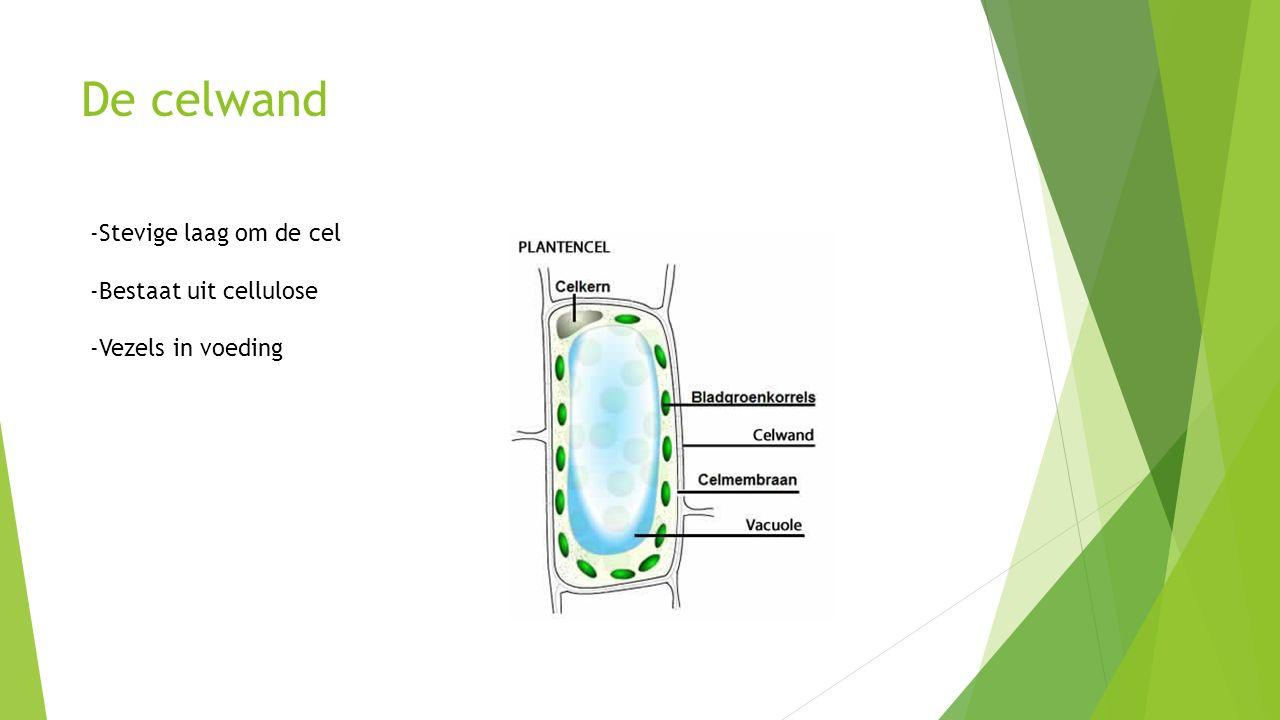 De celwand -Stevige laag om de cel -Bestaat uit cellulose
