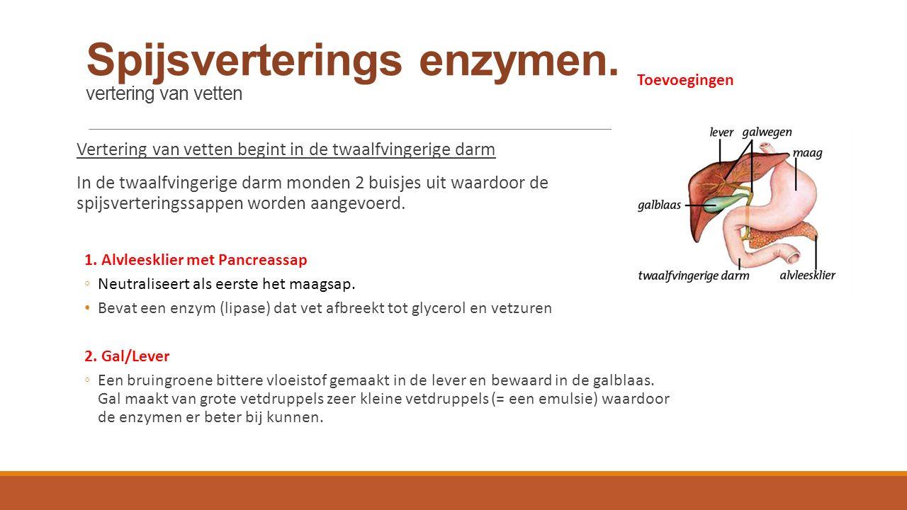 Spijsverterings enzymen. vertering van vetten