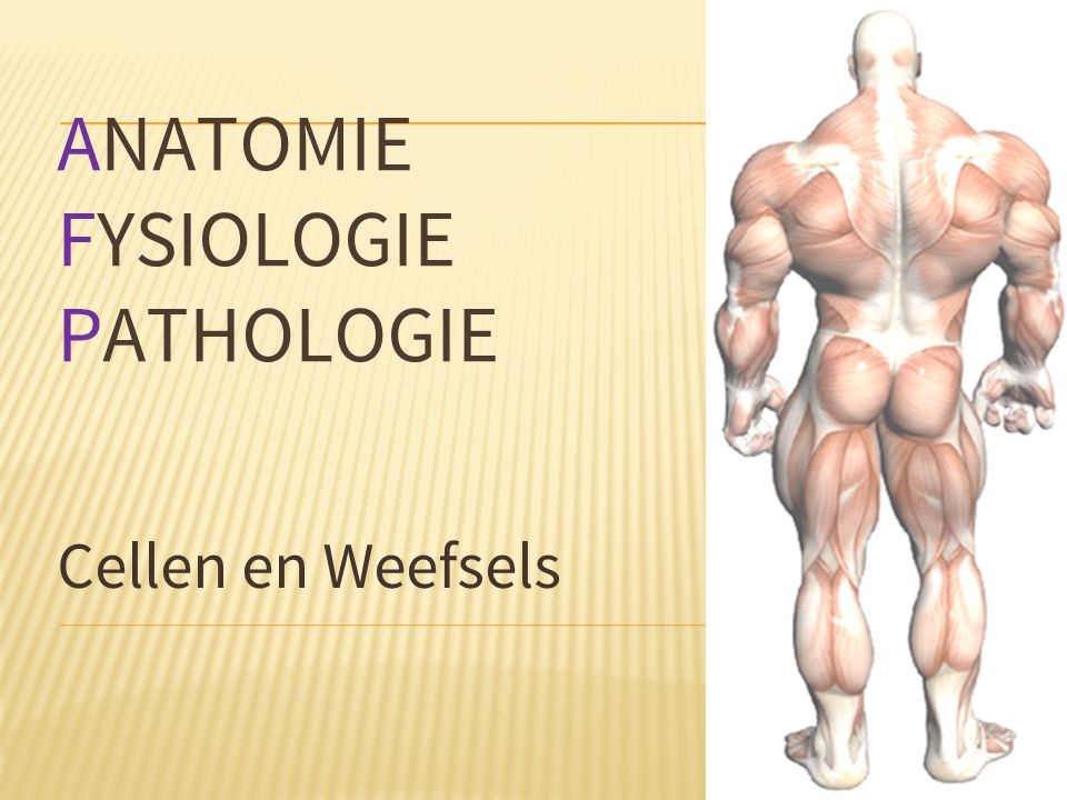 ANATOMIE FYSIOLOGIE PATHOLOGIE