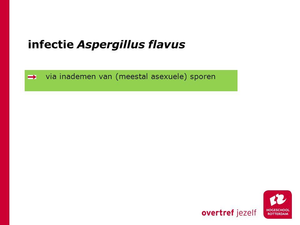 infectie Aspergillus flavus