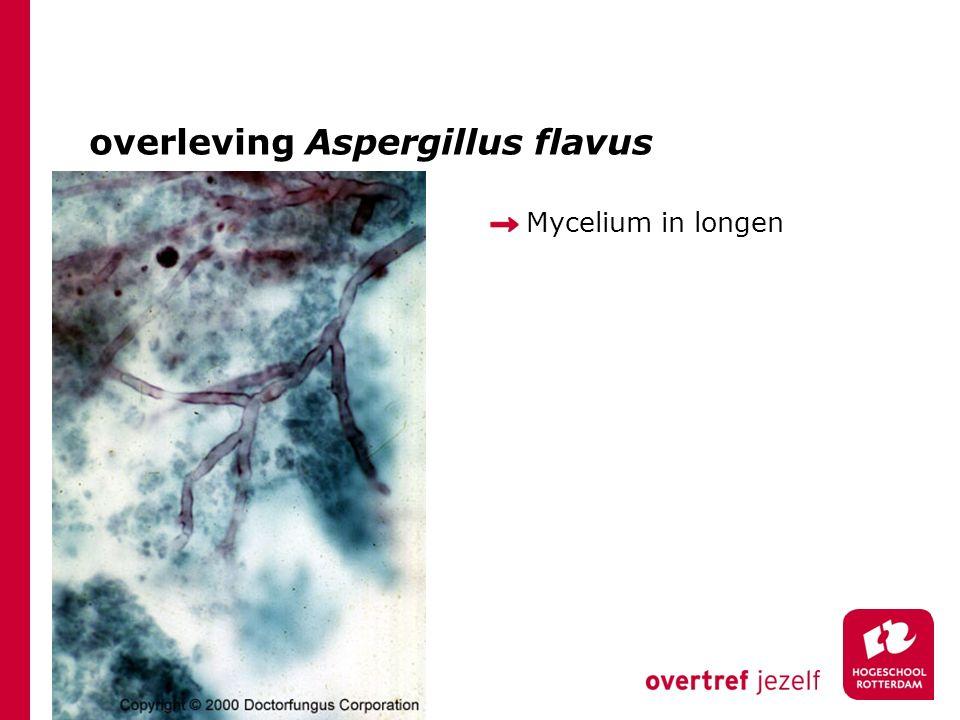 overleving Aspergillus flavus