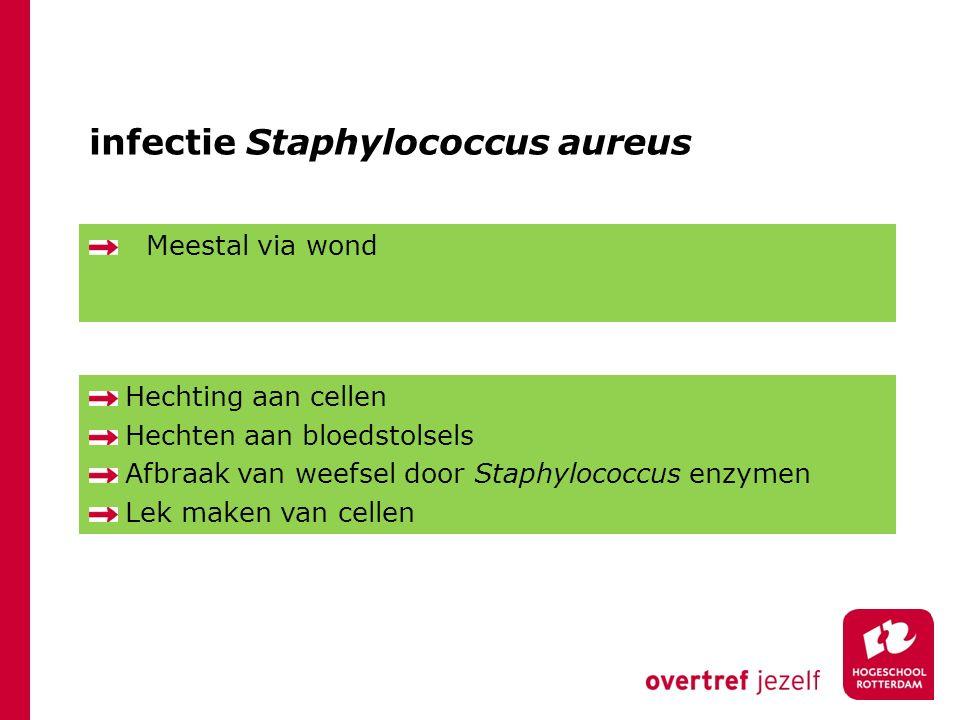 infectie Staphylococcus aureus