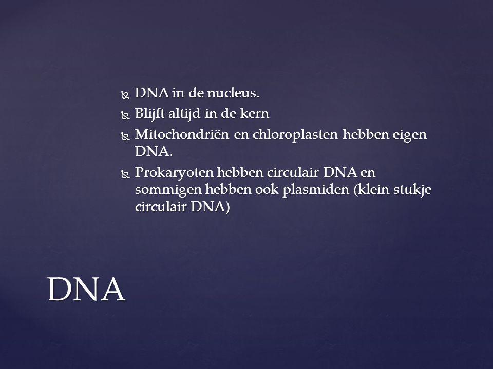 DNA DNA in de nucleus. Blijft altijd in de kern