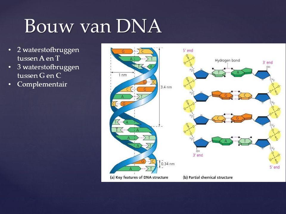 Bouw van DNA 2 waterstofbruggen tussen A en T