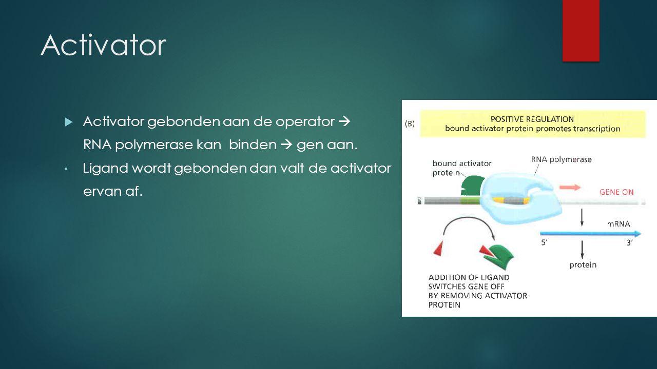 Activator Activator gebonden aan de operator 