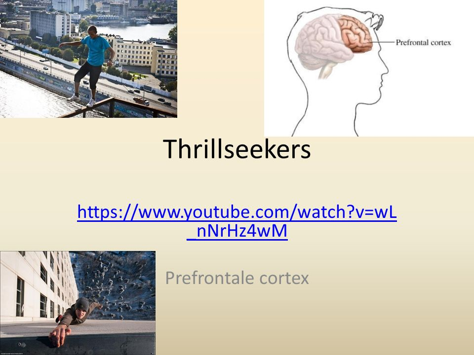 https://www.youtube.com/watch v=wL_nNrHz4wM Prefrontale cortex