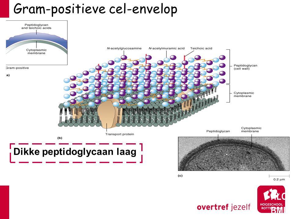 Gram-positieve cel-envelop