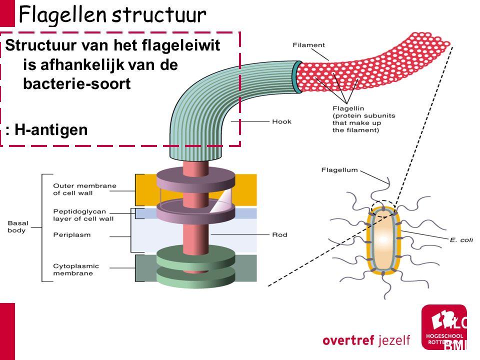 Flagellen structuur Structuur van het flageleiwit is afhankelijk van de bacterie-soort. : H-antigen.
