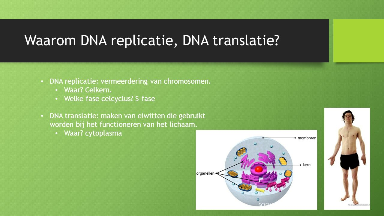 Waarom DNA replicatie, DNA translatie