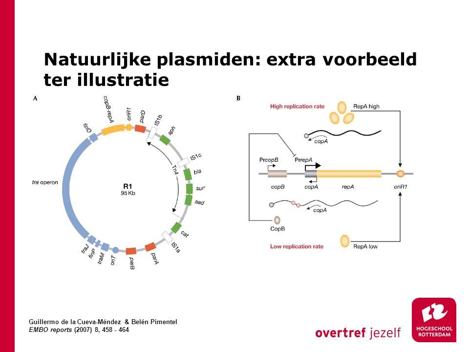 Natuurlijke plasmiden: extra voorbeeld ter illustratie