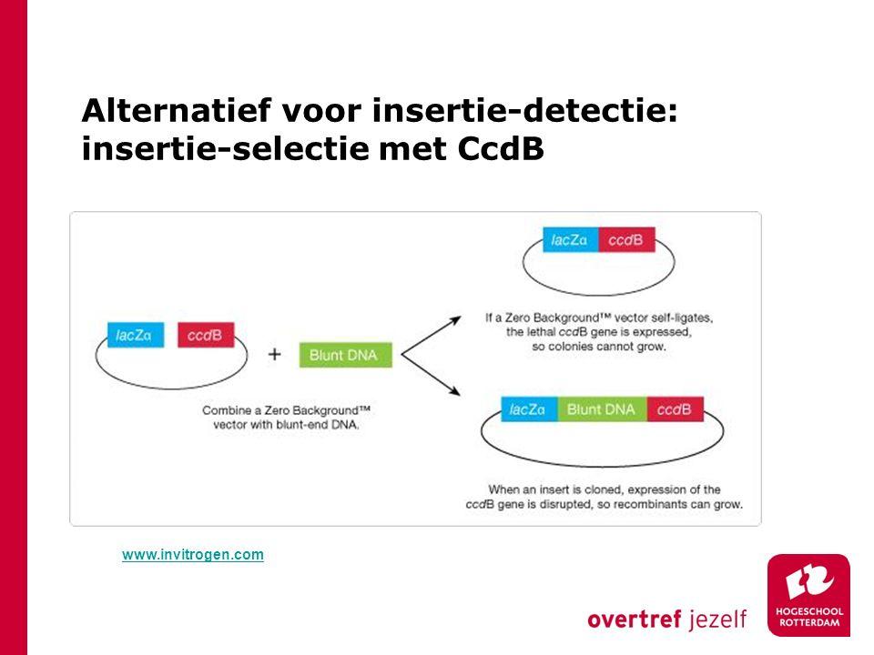 Alternatief voor insertie-detectie: insertie-selectie met CcdB
