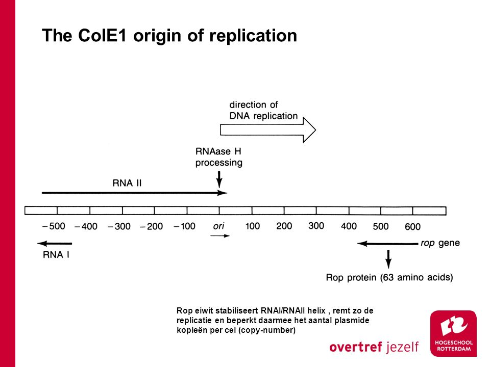 The ColE1 origin of replication