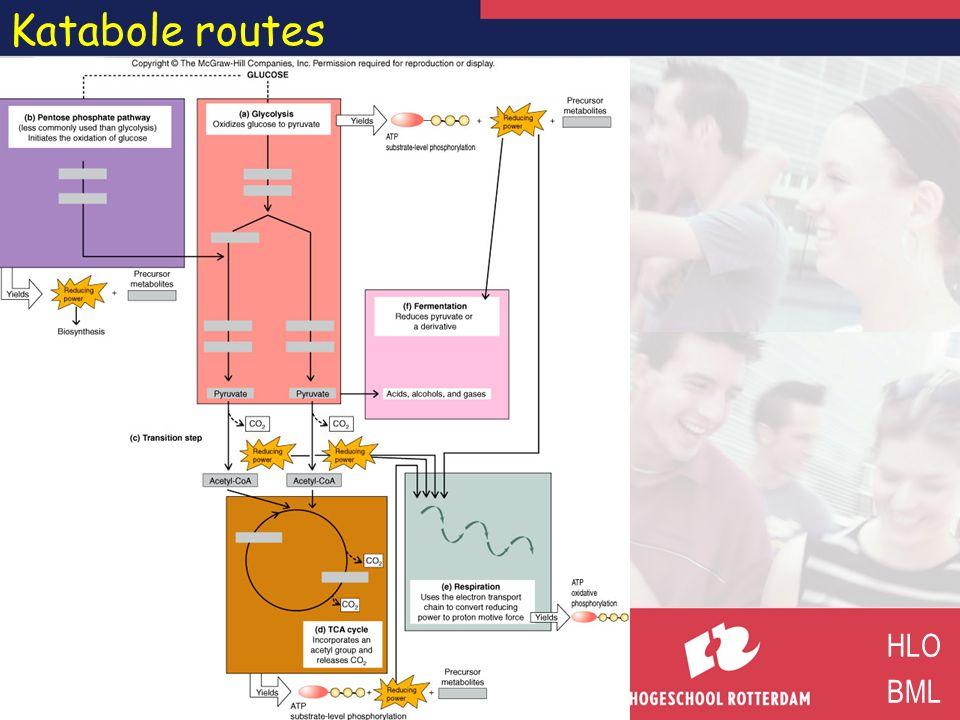Katabole routes HLO BML