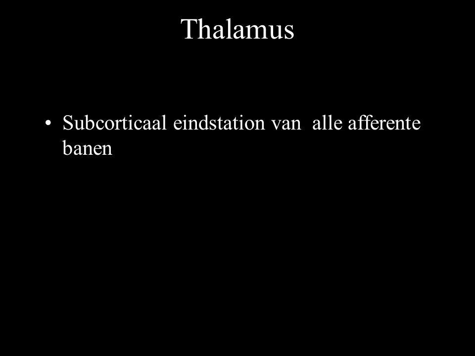 Thalamus Subcorticaal eindstation van alle afferente banen
