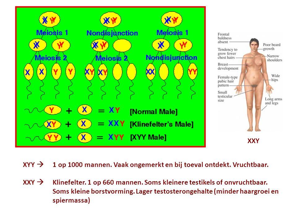 XXY XYY  1 op 1000 mannen. Vaak ongemerkt en bij toeval ontdekt. Vruchtbaar.