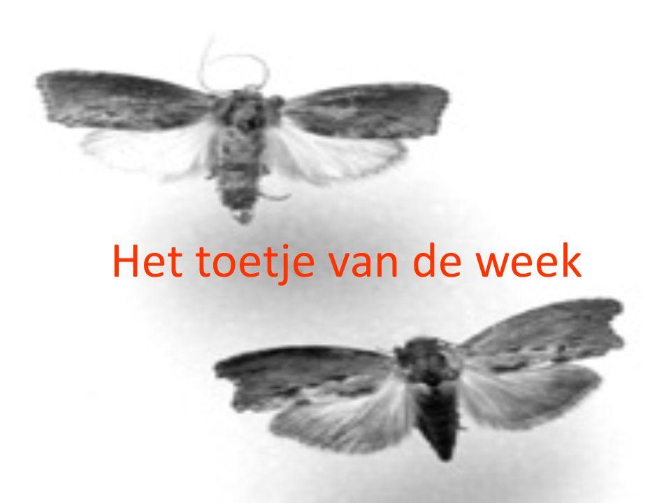 Het toetje van de week