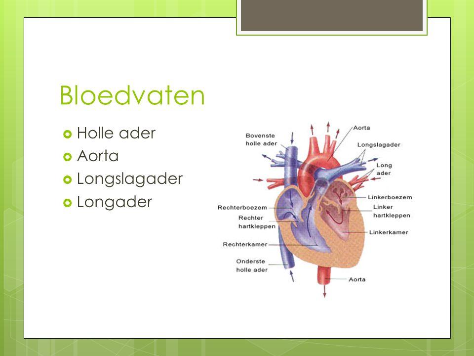 Bloedvaten Holle ader Aorta Longslagader Longader