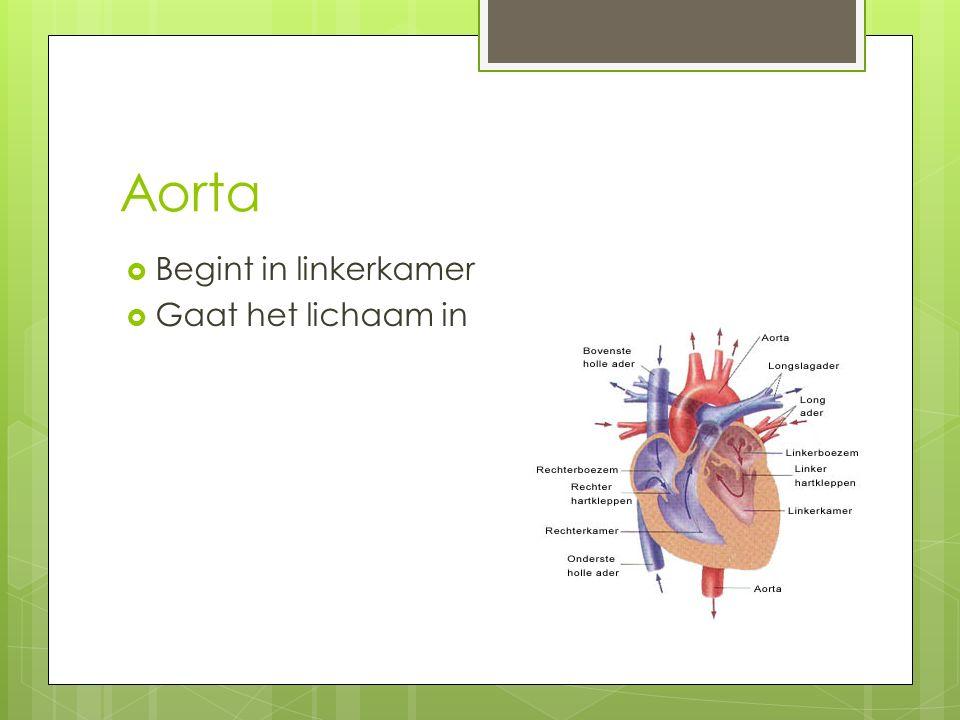 Aorta Begint in linkerkamer Gaat het lichaam in