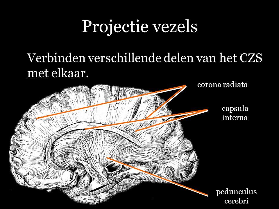 Projectie vezels Verbinden verschillende delen van het CZS met elkaar.