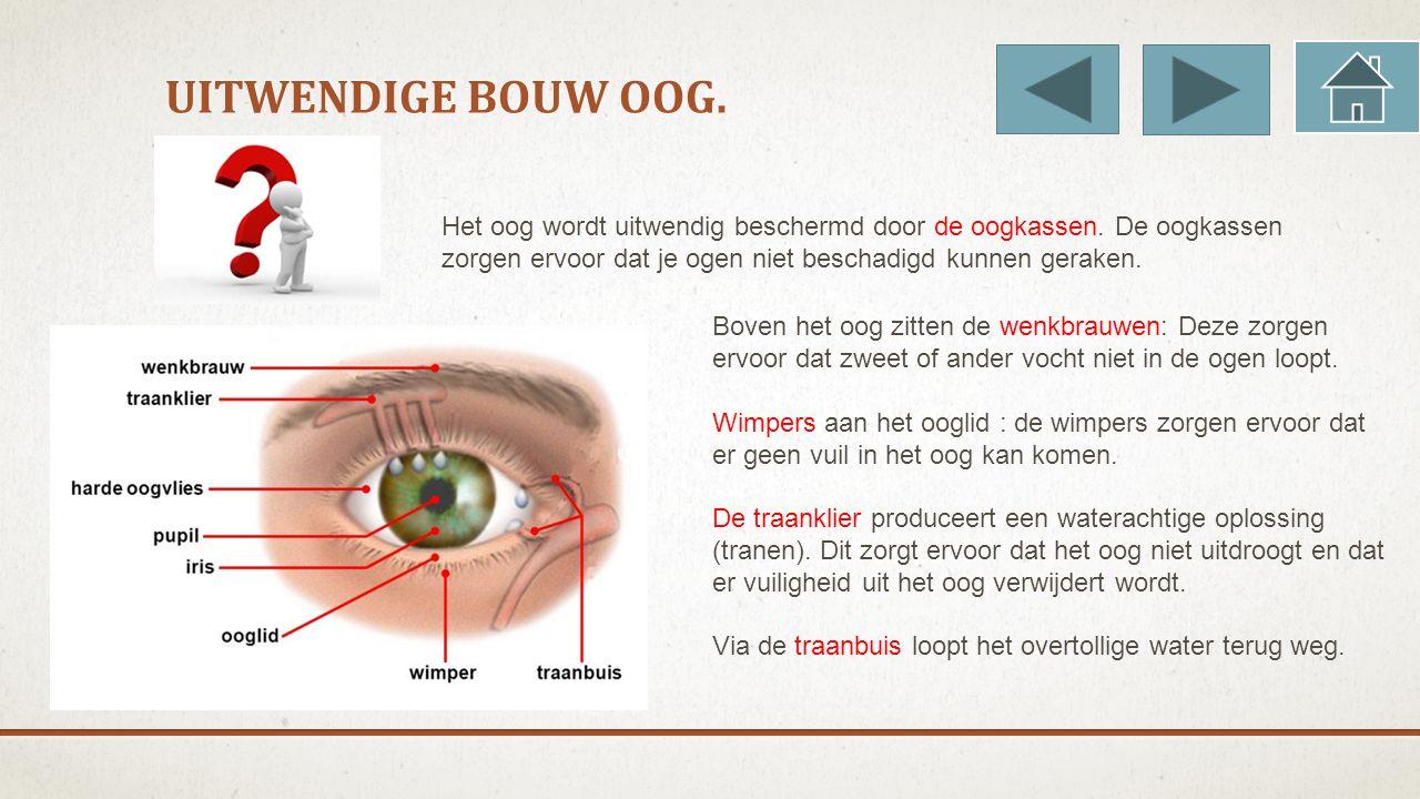 Uitwendige bouw oog. Het oog wordt uitwendig beschermd door de oogkassen. De oogkassen zorgen ervoor dat je ogen niet beschadigd kunnen geraken.