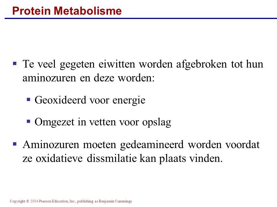 Protein Metabolisme Te veel gegeten eiwitten worden afgebroken tot hun aminozuren en deze worden: Geoxideerd voor energie.
