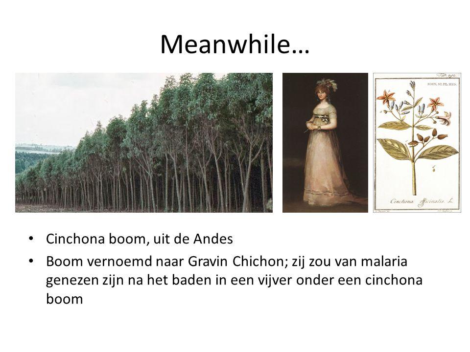 Meanwhile… Cinchona boom, uit de Andes