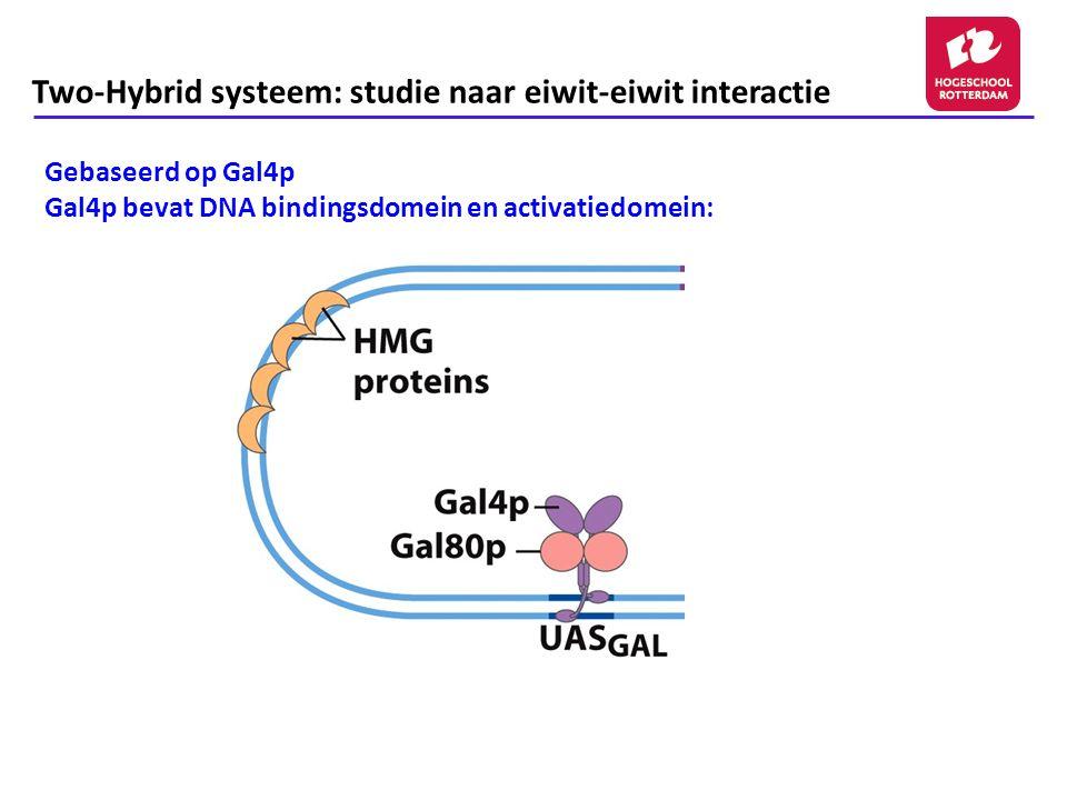 Two-Hybrid systeem: studie naar eiwit-eiwit interactie