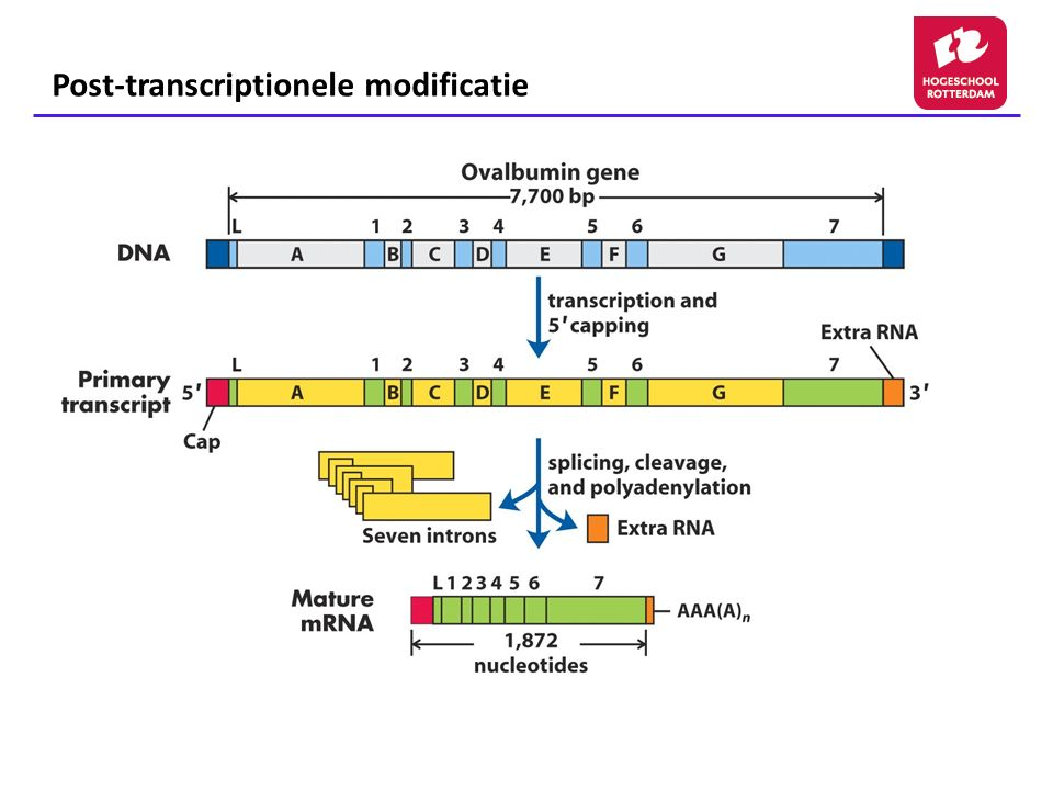 Post-transcriptionele modificatie